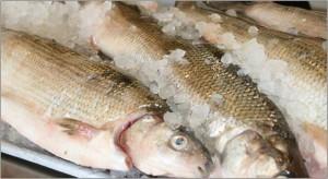 Berry Family Enterprises – Traverse City- Fresh White Fish