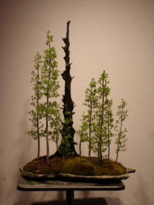 "Dean Bull- Bonsai Artist ""Larch Forest"""